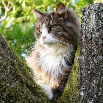 Kattentrimsalon alkmaar